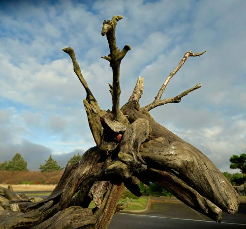 Driftwood deer in Ocean Shores, Washington photo by Curtis Mekemson.