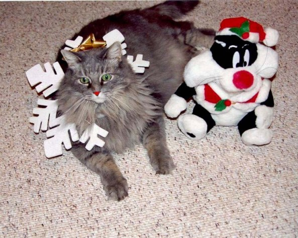 FE and Sylvester dressed for Christmas