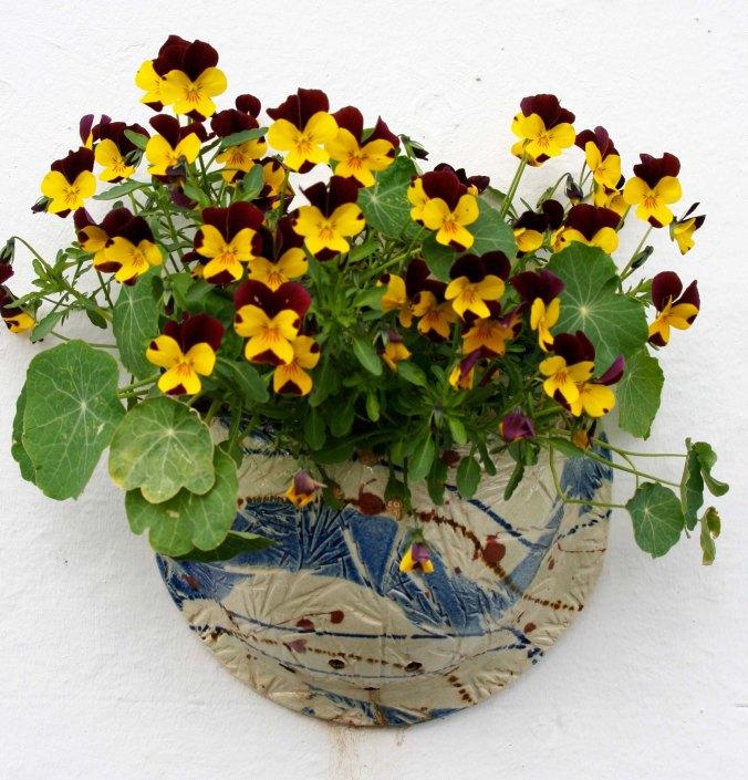 Flowers in Scotland