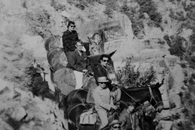Mule trip into Grand Canyon