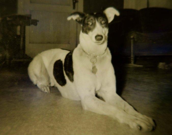 Pat the Greyhound