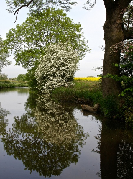 Scenic view with flowering tree along Trent and Mercy Canal