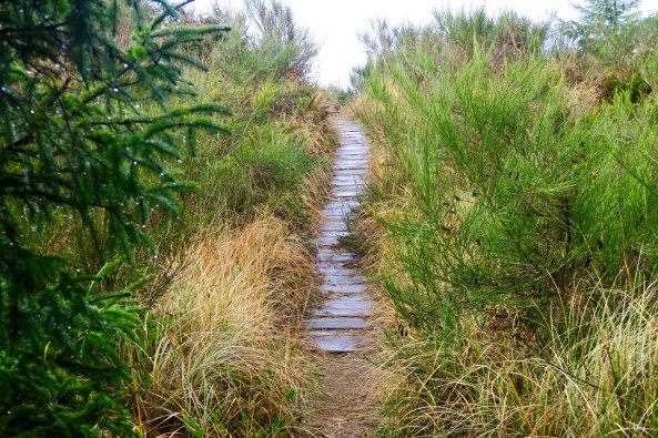 Wet boardwalk at Griffith-Pride State Park, WA
