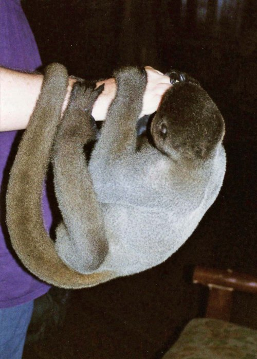 a handful of monkey