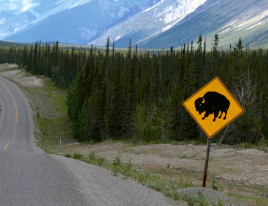 Bison warning sign on Alaska Highway
