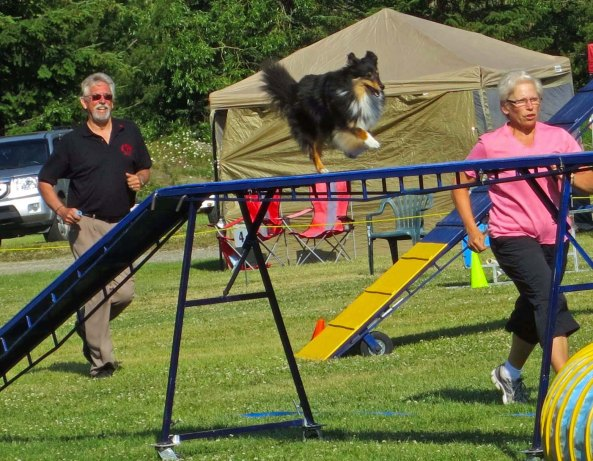 Dog agility trials, across bridge in Quesnel, BC