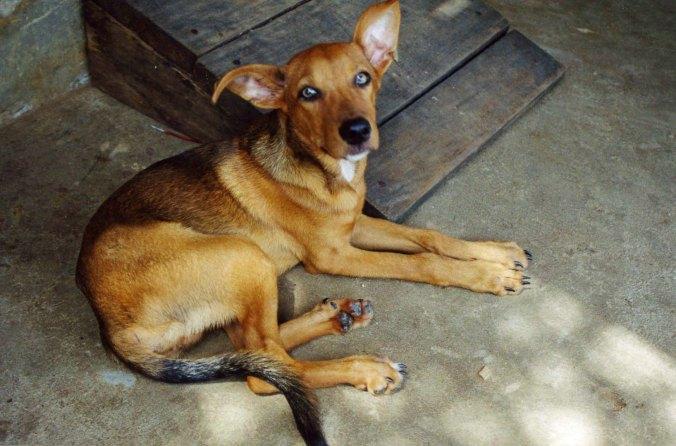Dog in Nova Airao, Brazil