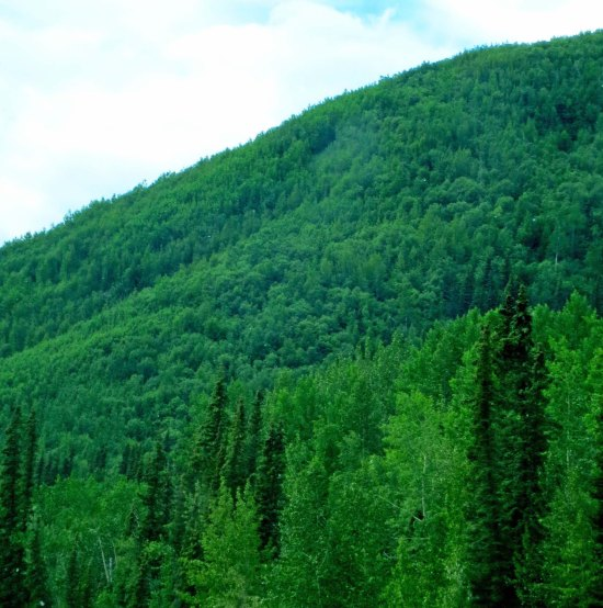 Green forests along Alaska Highway