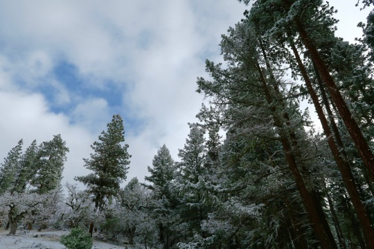 Rogue River National Forest on a snowy day