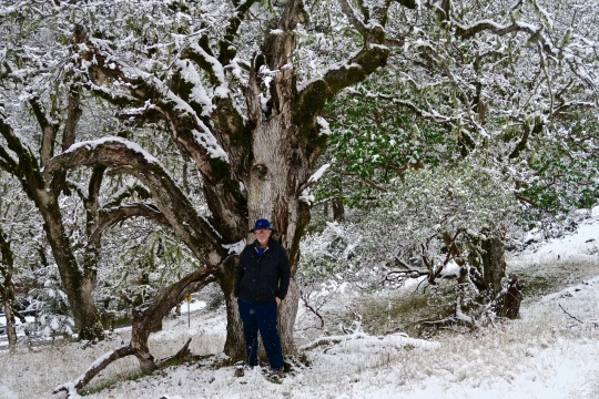 Old oak tree in Rouge River National Forest with Curt Mekemson