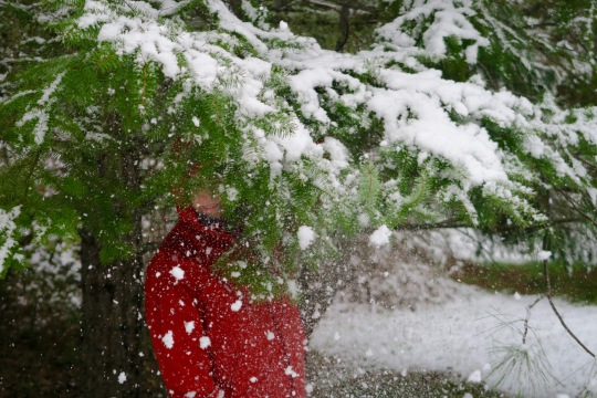 Snow falls off limb onto Peggy Mekemson
