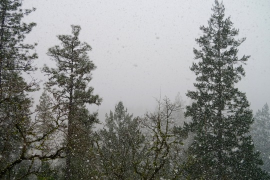 Snowing in the Upper Applegate Valley