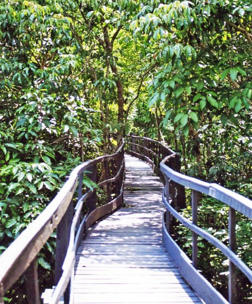 Jungle walkway at Ariau Lodge in Brazil