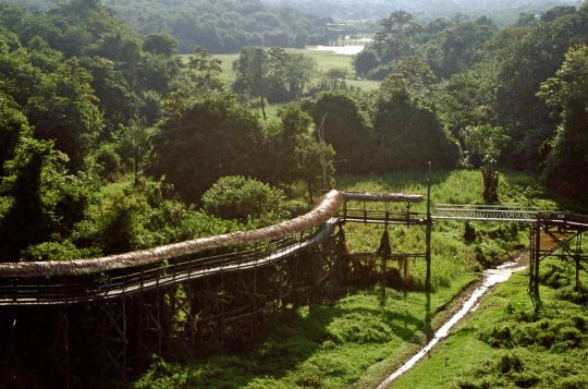 Jungle walkway in Brazil