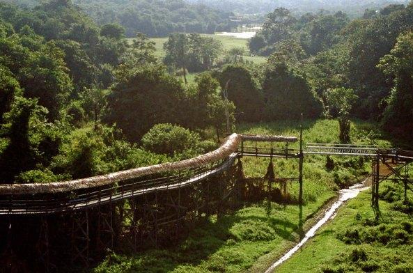 Jungle walkway in Brazil