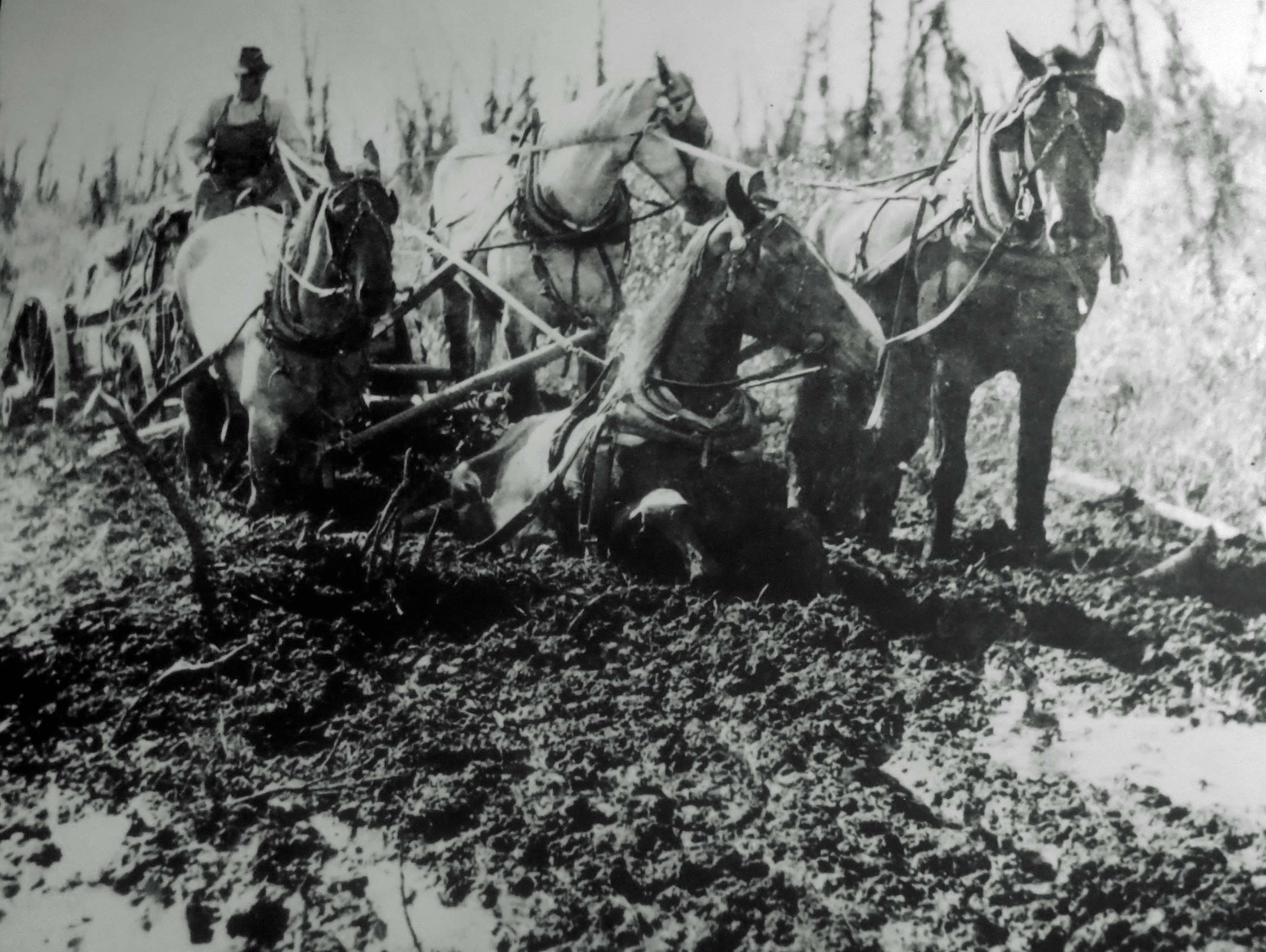 Team sinking in mud when building Alaska Highway