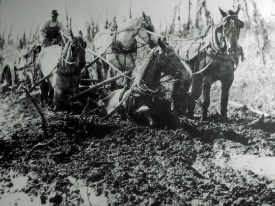 Team sinking in mud when building Alaska Highway