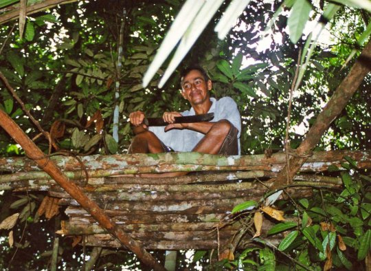 Tree platform for hunting in the Amazon Rainforest