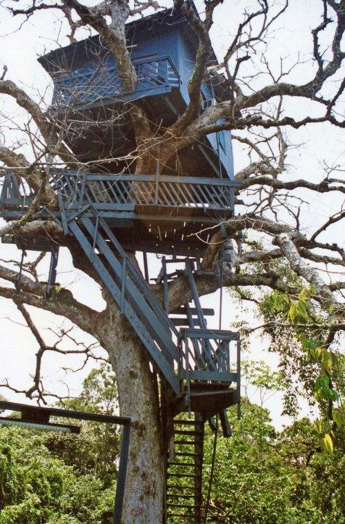 Treehouse room at Ariau Lodge