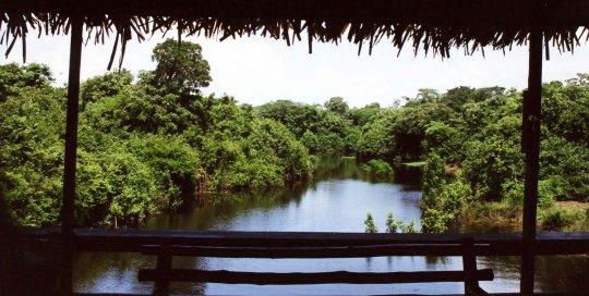 View from Ariau Lodge walkway