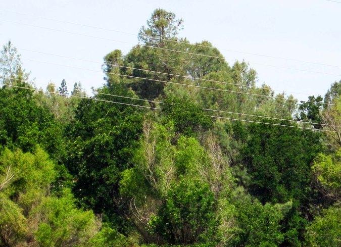 Woods in Diamond Springs