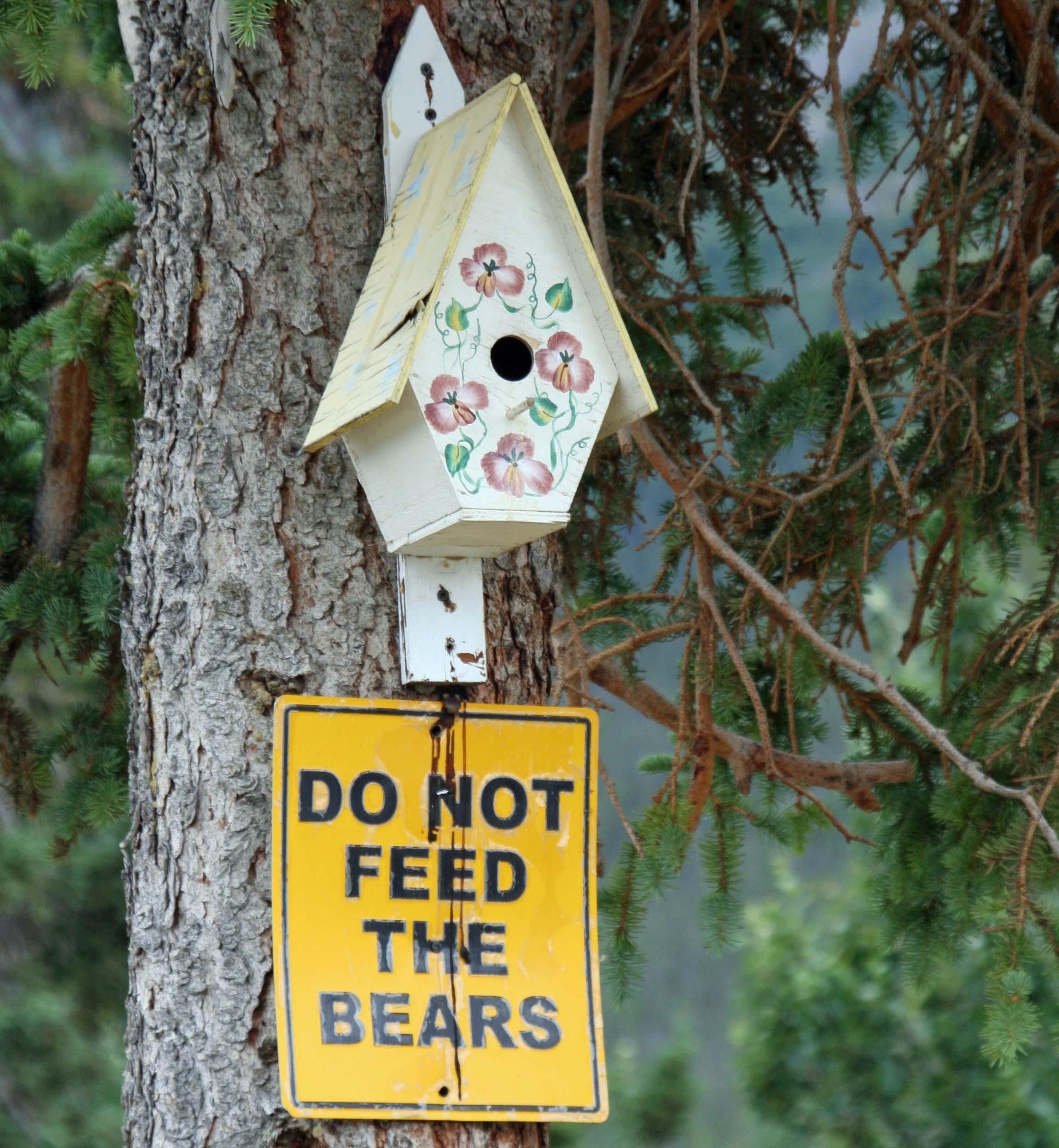 Do not feed bears, YT