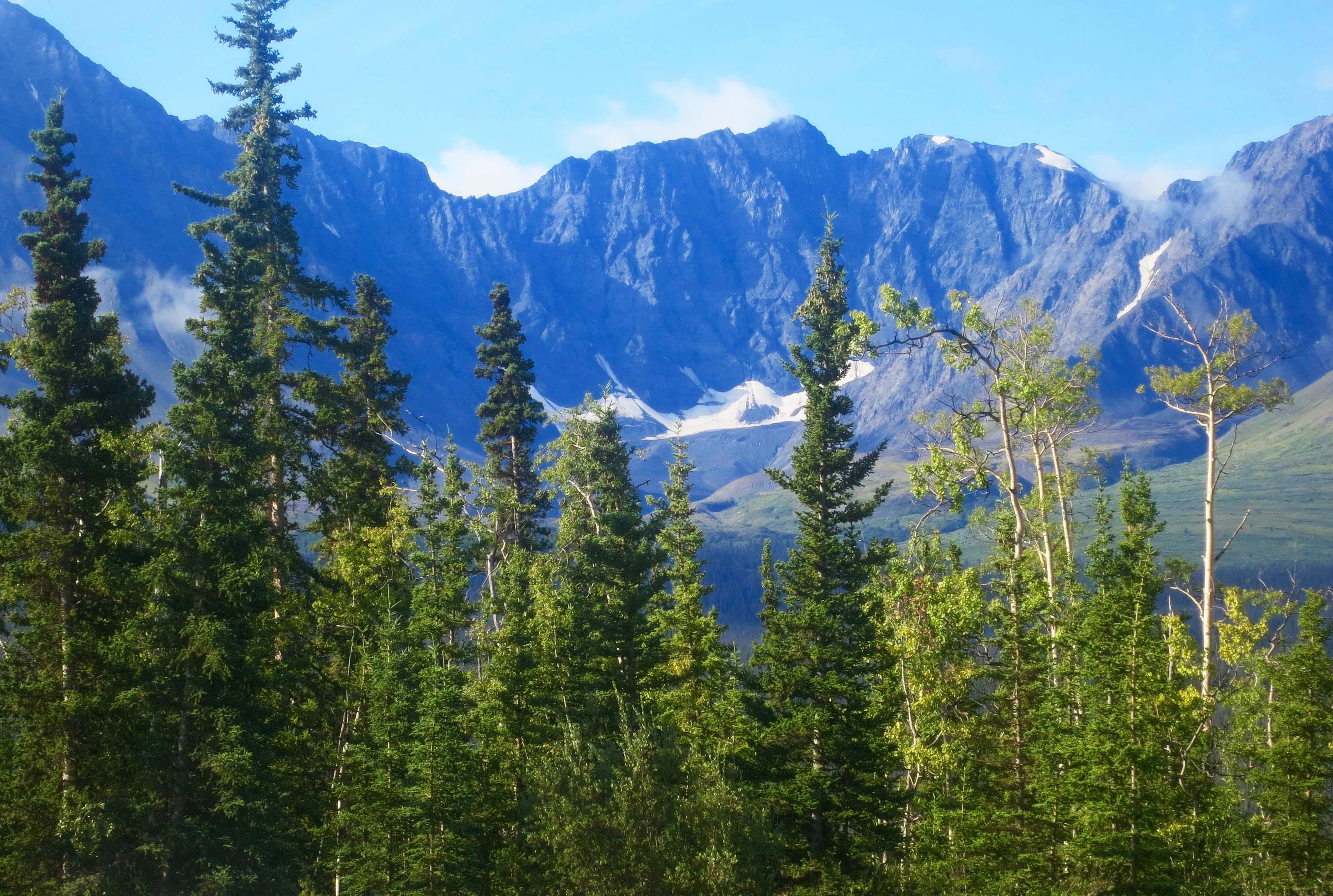 Yukon mountain and trees