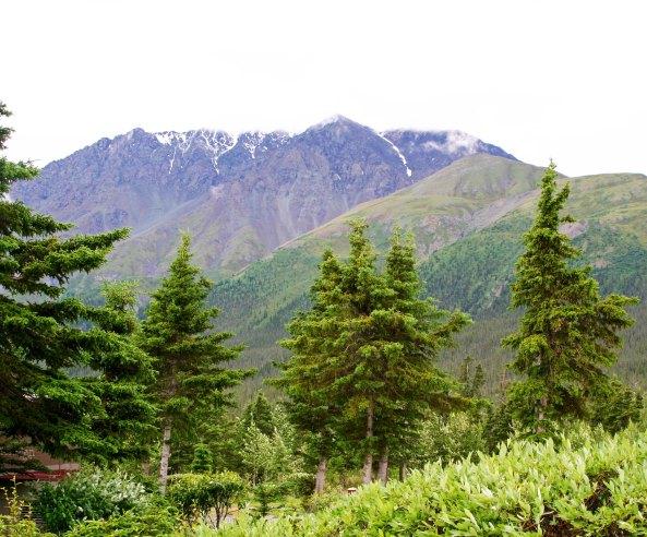 Yukon scene