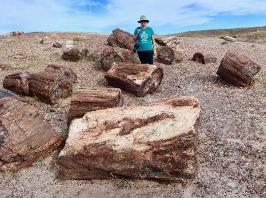 Photo demonstrates the sheer quantity of petrified wood in Petrified Forest National Park.