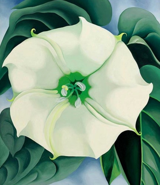 Georgia O'Keefe's Jimson weed painting used for curt Mekemson blogs on Georgia O'Keefe